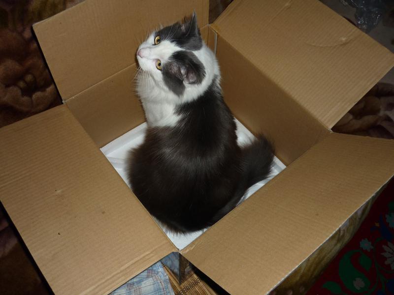 кошка в коробке от аэрогриля